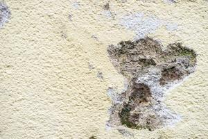 Valesokkelirakenteen aiheuttama homevaurio seinän alaosassa
