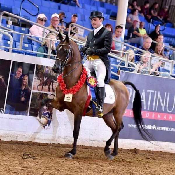From Youth Rider to Professional Trainer - How Josh Shino Became One To Watch in the Arabian World