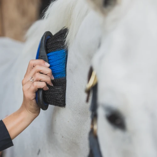 Corro Courses: How To Properly Clean Your Horse Brushes