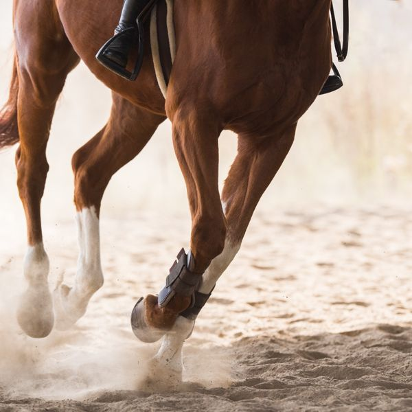 How to Ride a Horse: A Comprehensive Guide