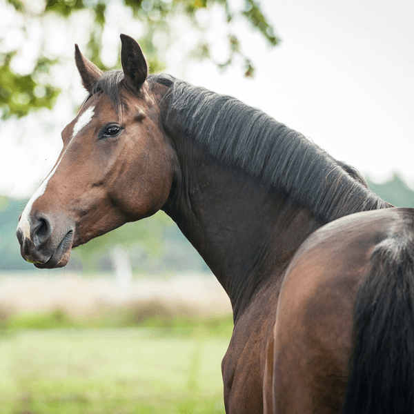 How to Support Your Horse's Gut Health