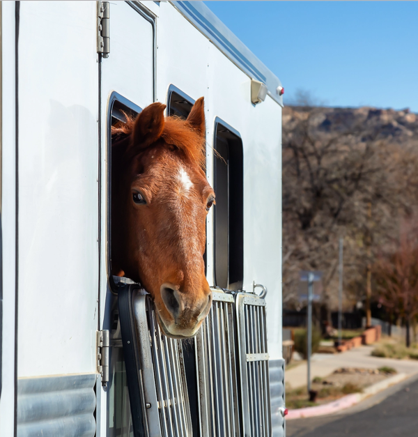 On The Road: Caring For Your Horse Away From Home