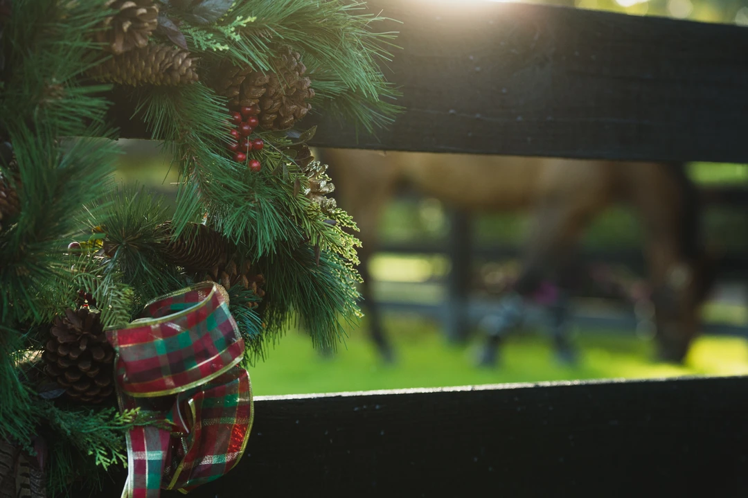 Make sure decorations aren't easily available for horses to snack on.
