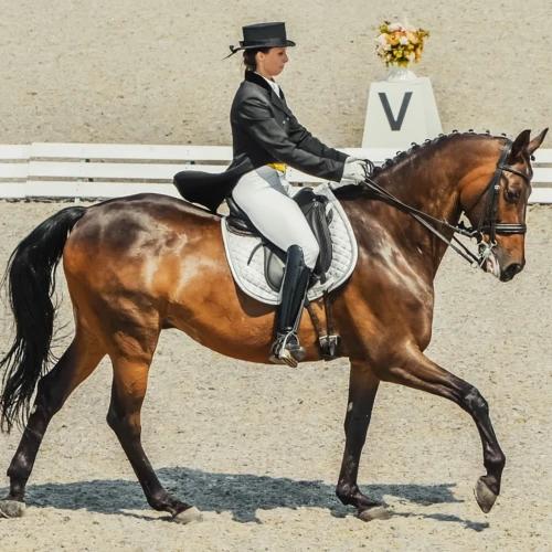 "Corro 101: Dressage Breaking Down ""Equestrian Ballet"""