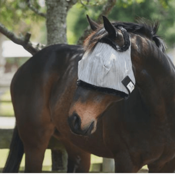 Get A Jump On Fly Season — Protect Your Horse From Pesky Flies