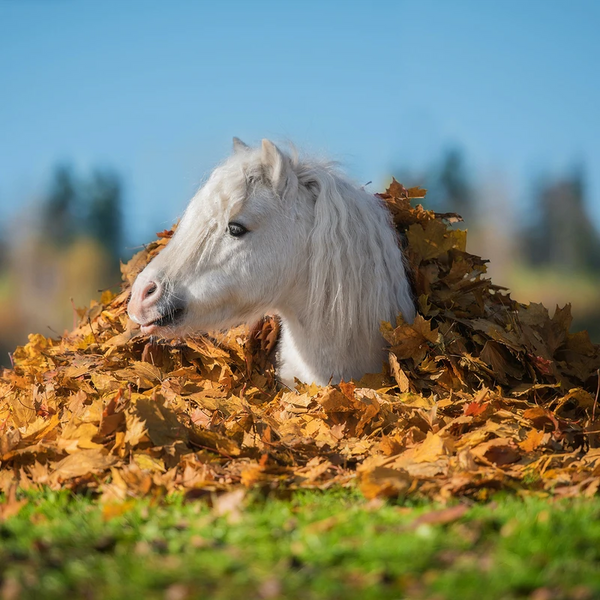Update Your Horse Care Routine with These Top Products for Fall