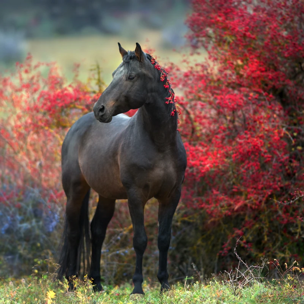 Help Your Horse Smoothly Transition into Fall with These Horse Care Tips & Tricks