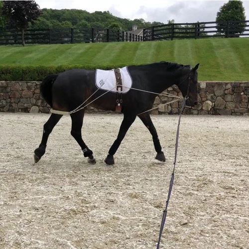 Corro Courses: Lunging 101 Presented By The PonyApp