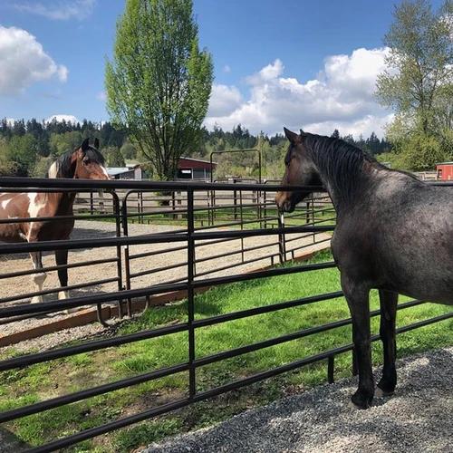 #CorroCares Spotlight: Save A Forgotten Equine