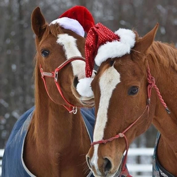 Corro's Holiday Gift Guides—Find the Perfect Gifts for All the Horses and People on Your List