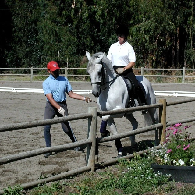 Andreas Hausberger helping Jennifer Roth with her Lipizzan stallion. Image courtesy of Jennifer Roth.