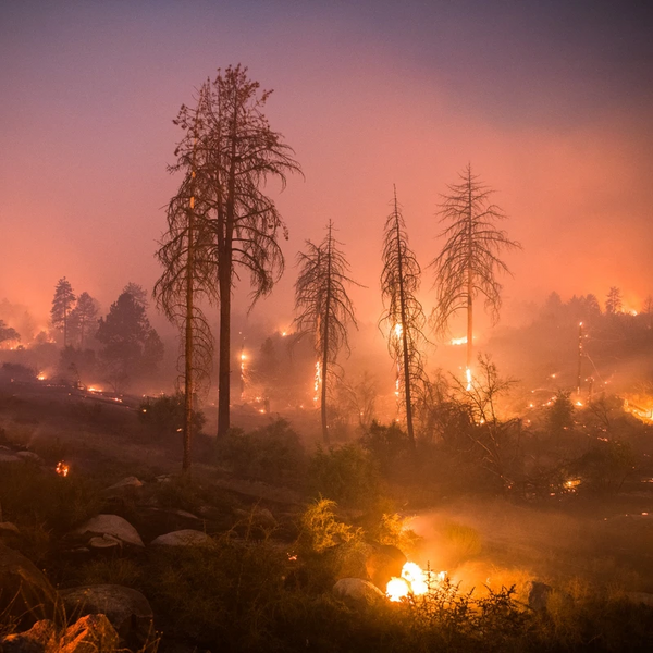 What You Need to Know About the California Wildfires & How to Prepare for a Natural Disaster with Horses