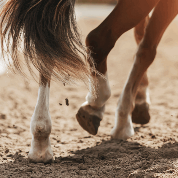 Horse Conditioning for Top Performance