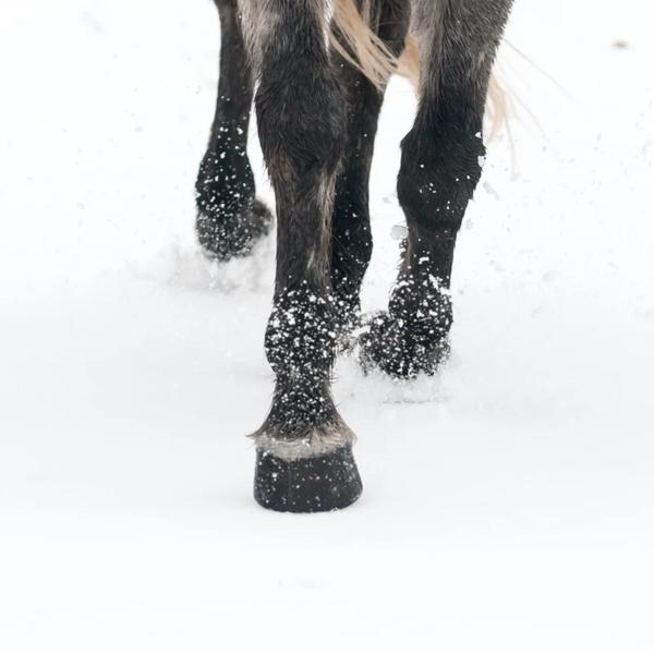 Caring for Your Horse's Hooves During Winter