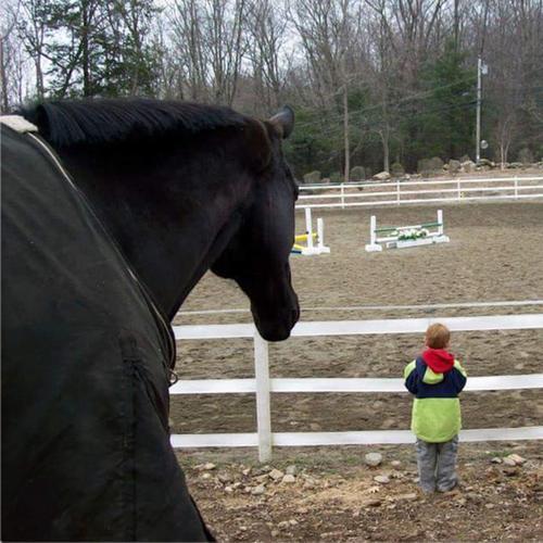 #CorroCares Spotlight: Rising Starr Horse Rescue