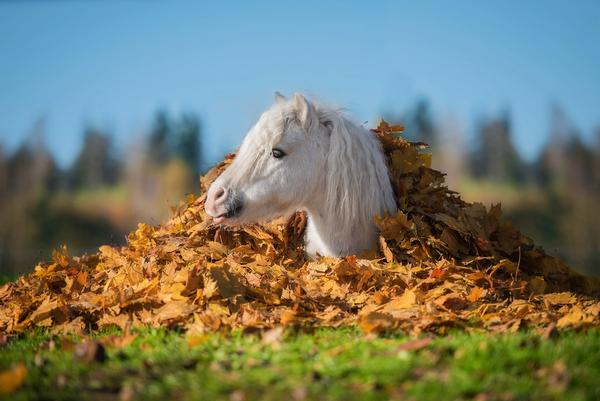 Essential Fall Horse Products: The Ultimate Horse Care Checklist For Changing Seasons