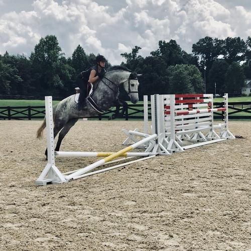 5 Tips for Working with Young or Green Horses