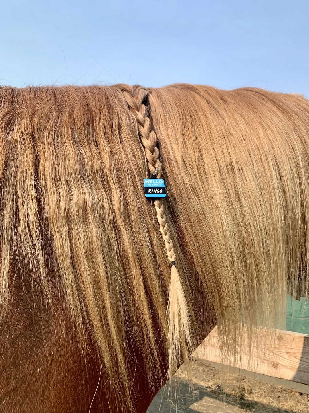 It's important that you braid your information into your horse's mane. I recommend going to a pet store and create a dog tag with your horse's information. Then, braid the tag into their mane using rubber bands. Image courtesy of Nicole Fava.