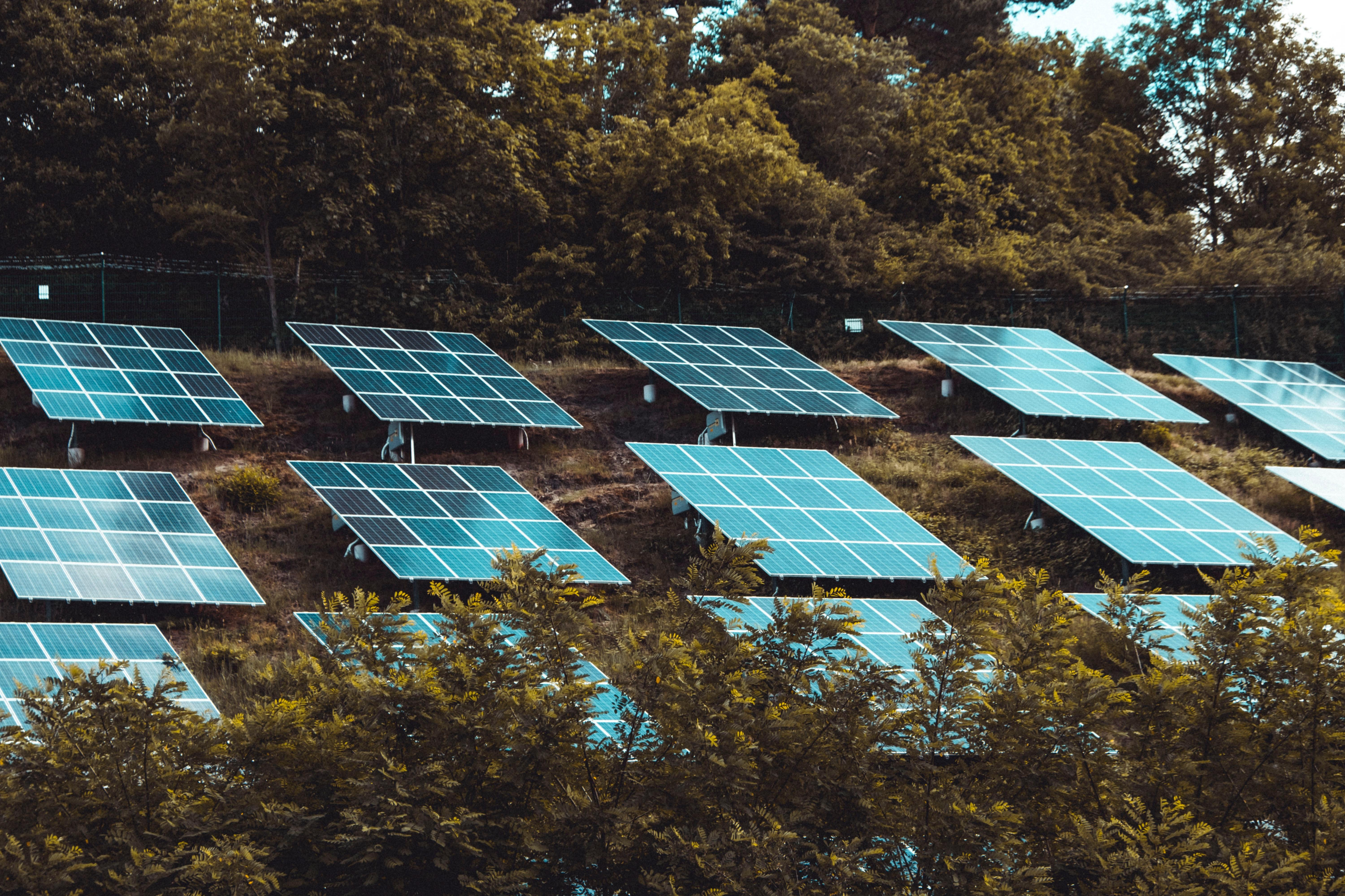 Solarpanels in the woods