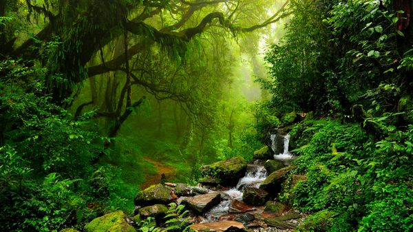 A stream in in front of a trail through the rich dense forest of Nepal