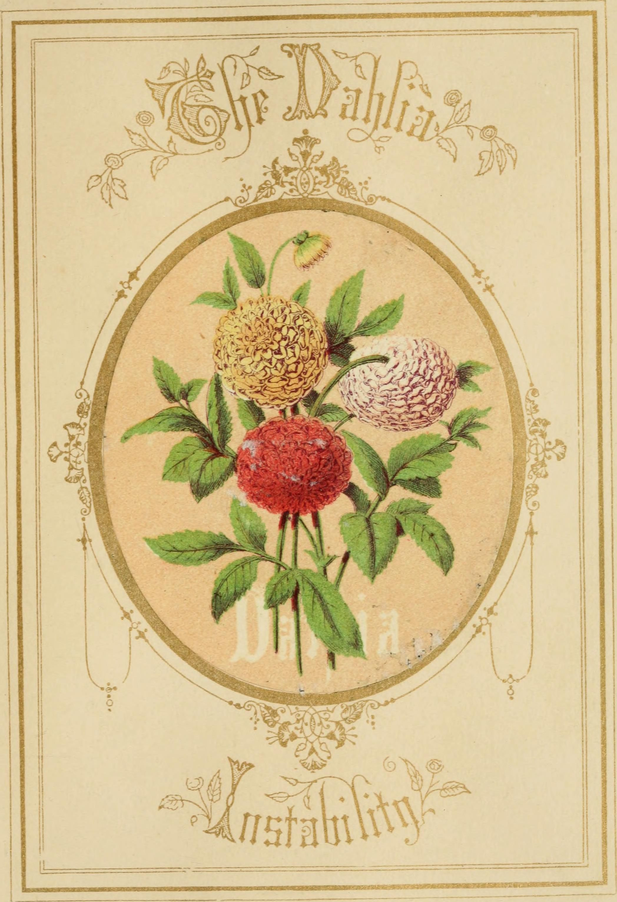 """An illustration from """"The Language of Flowers"""", 1857."""