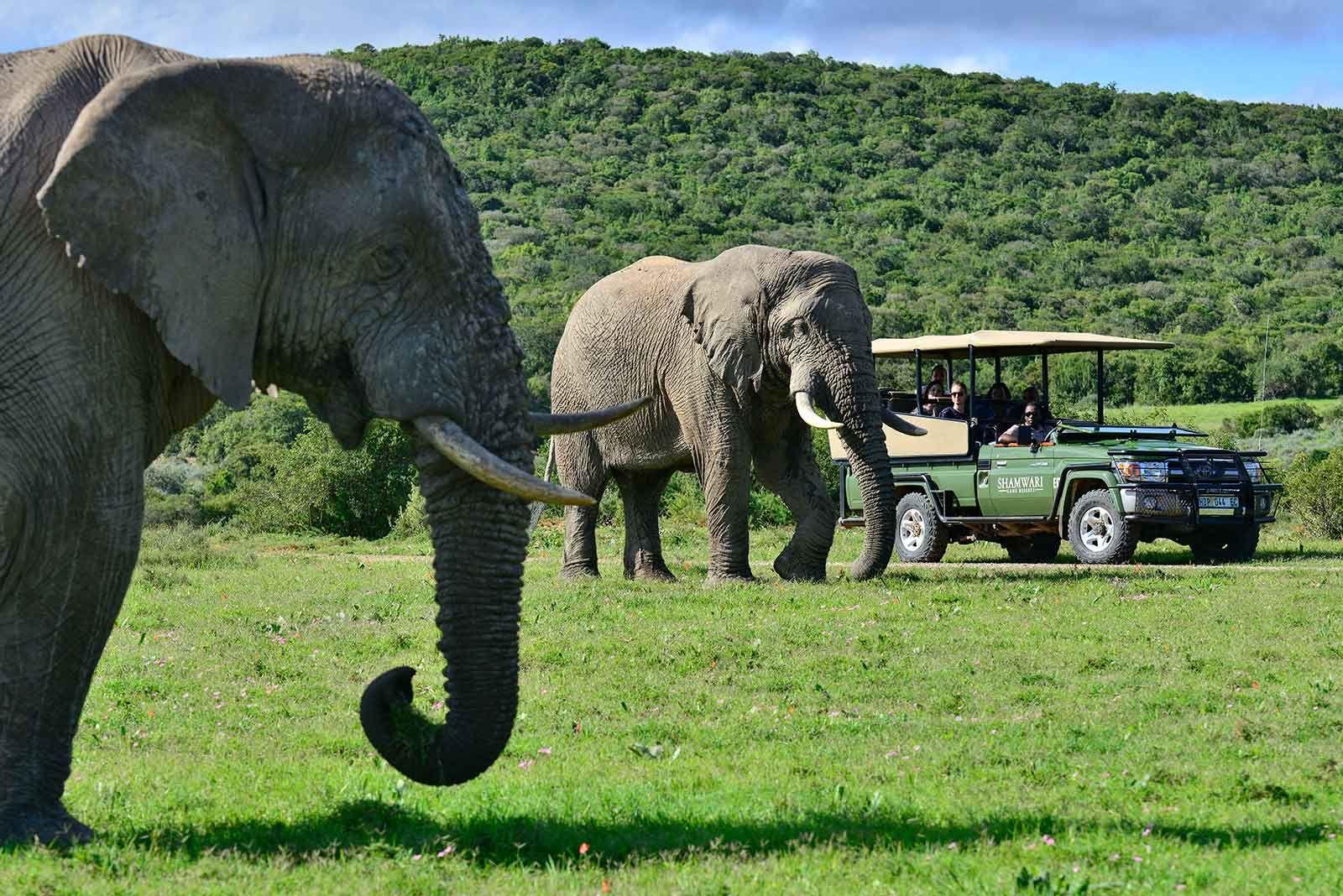 Shamwari Game Reserve