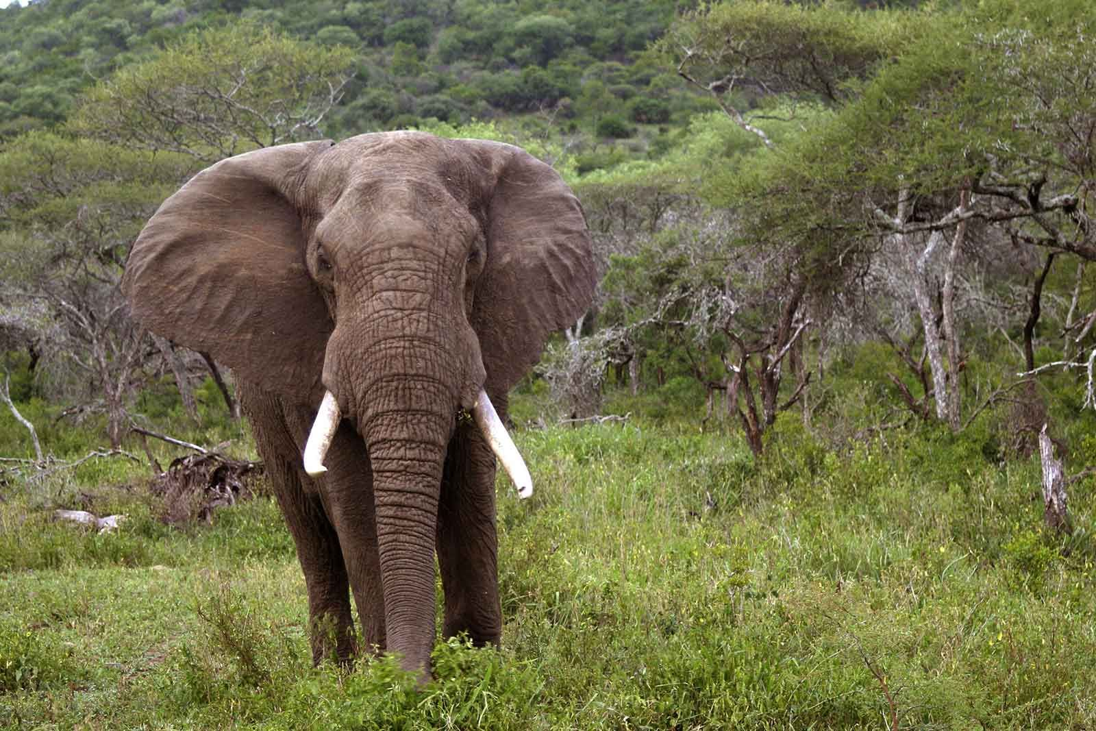 Mkuze Falls Game Reserve