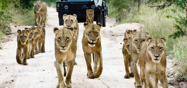 Makanyi and Sabi Sabi 7 night Safari