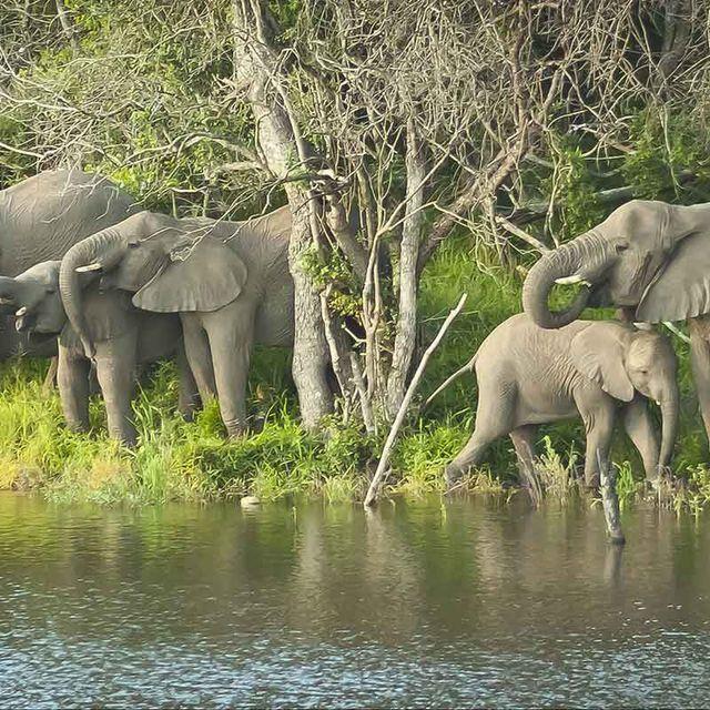 Hluhluwe iMfolozi Reserve