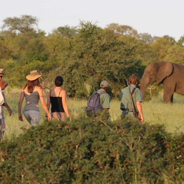 Rhino Walking Safaris Plains Camp