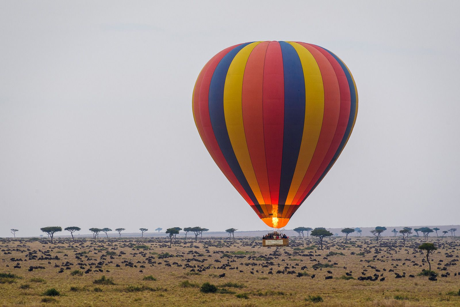 Mara Luxury Hot Air Balloon Safari