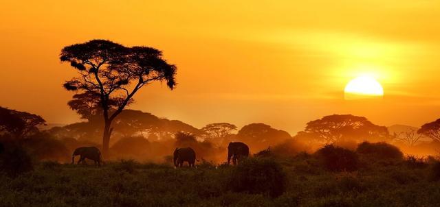 Amboseli and Mara in Depth