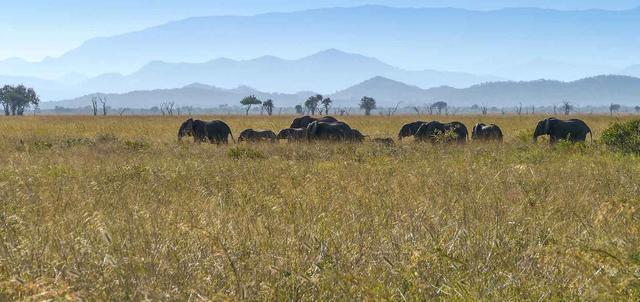 Best of Southern Tanzania