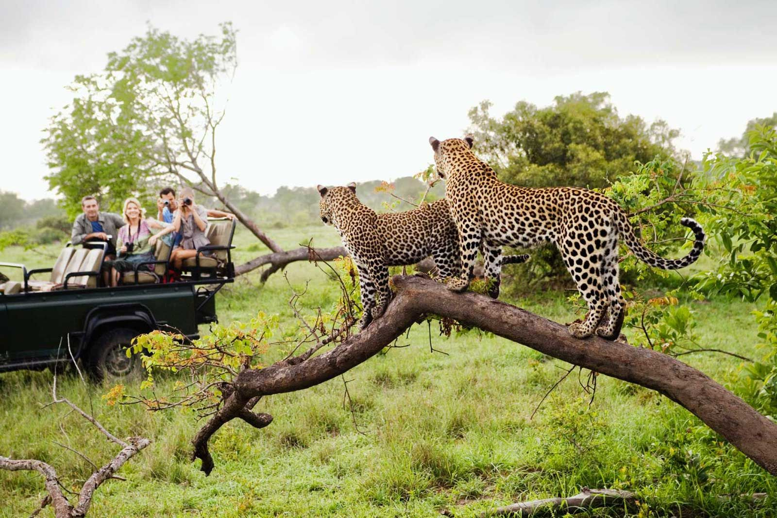Kruger National Park Safaris with Sun Safaris