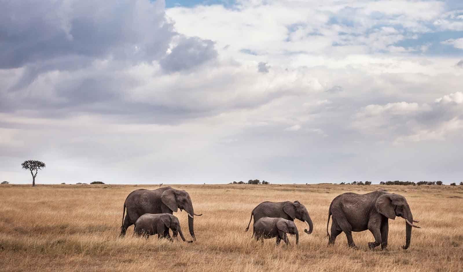 Amboseli, Lake Nakuru & Mara in Style