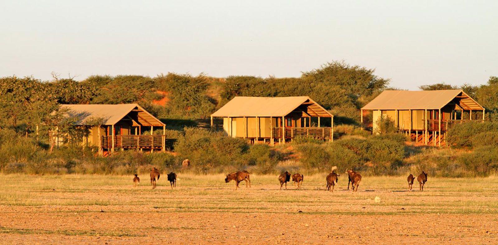 Suricate Kalahari Lodge