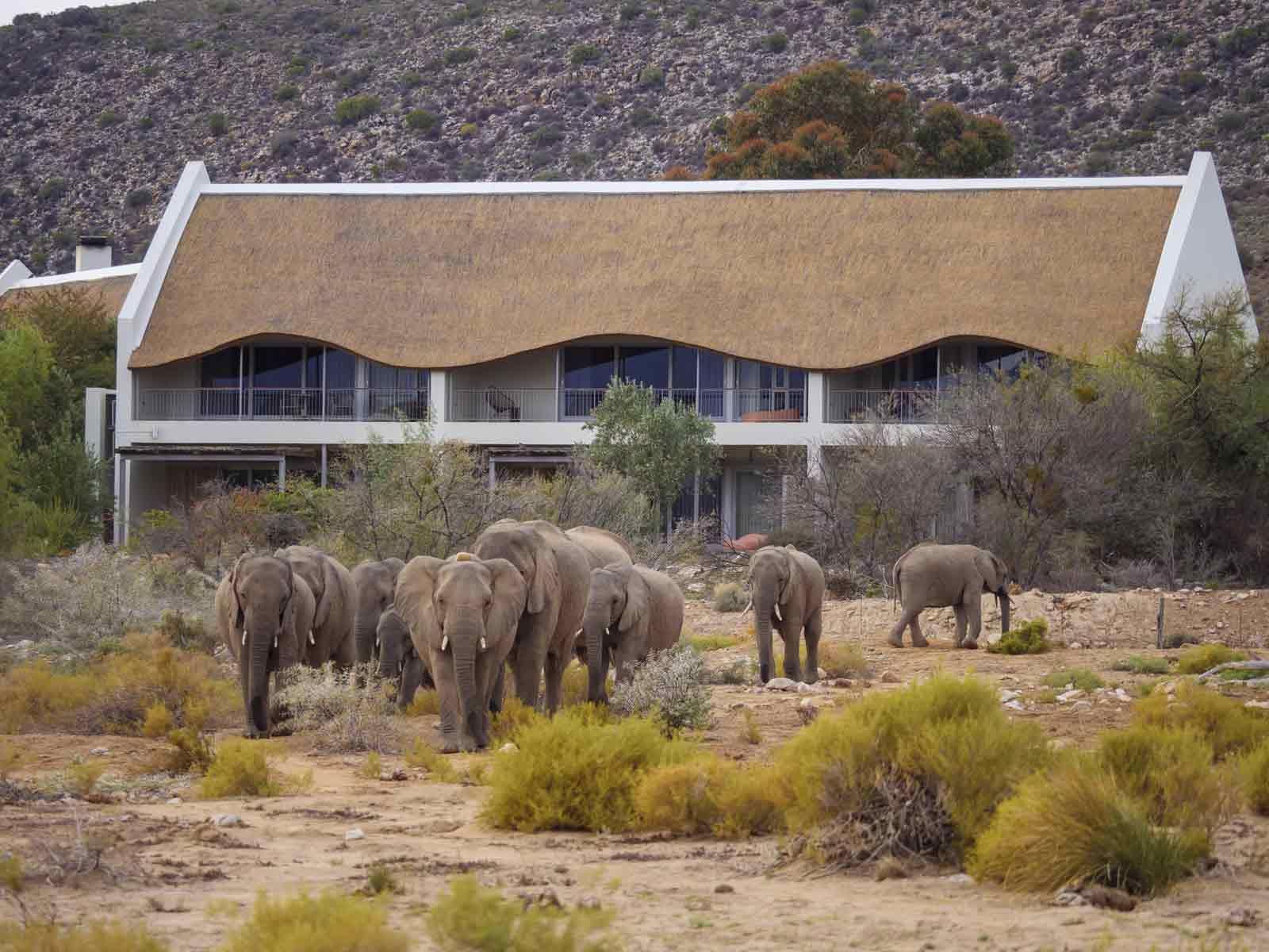 Twelve Apostles, Sanbona & Grootbos Luxury Safari