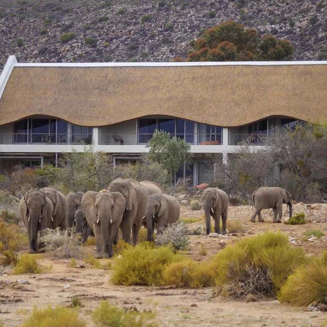 Twelve Apostles, Sanbona & Grootbos Luxury Safari