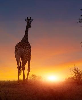 Zimbabwe - Southern Africa