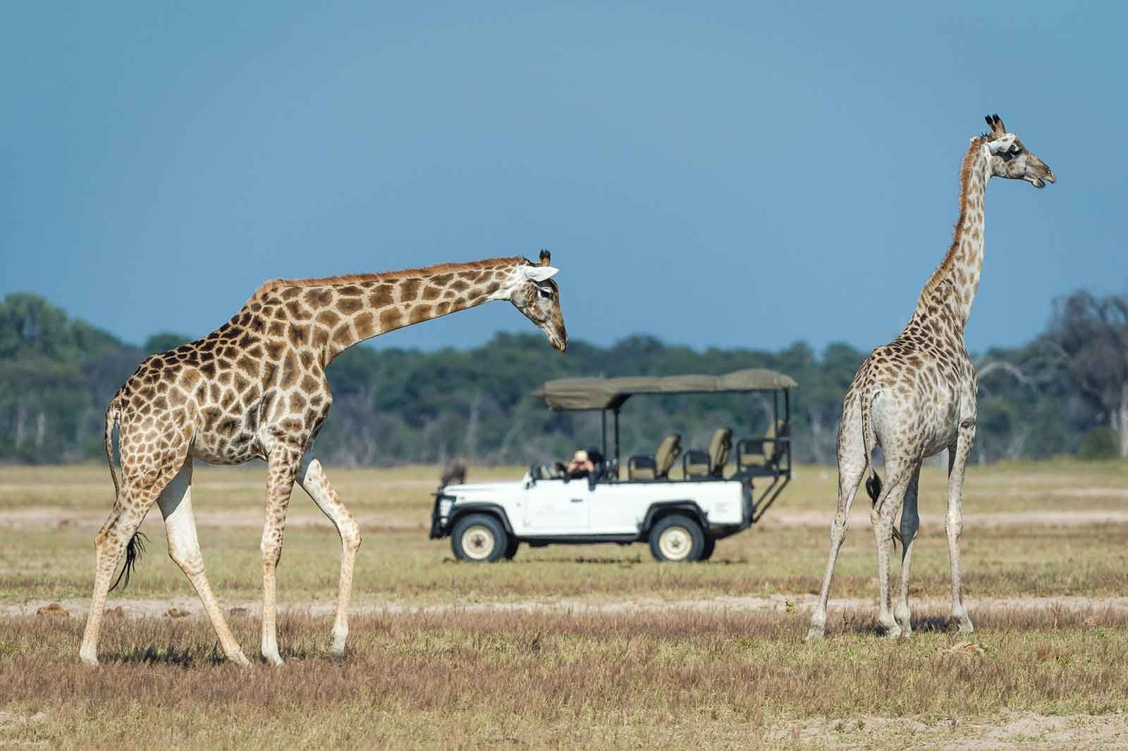 Hwange & Vic Falls Adventure