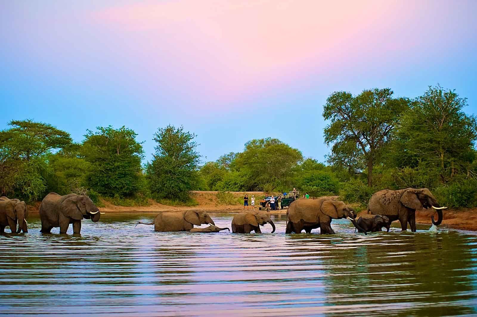 Kruger Park Safaris & Tours