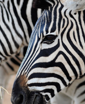 Tanzania - African Safari Planning Guides