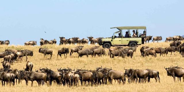 Migration Safari Comfortable