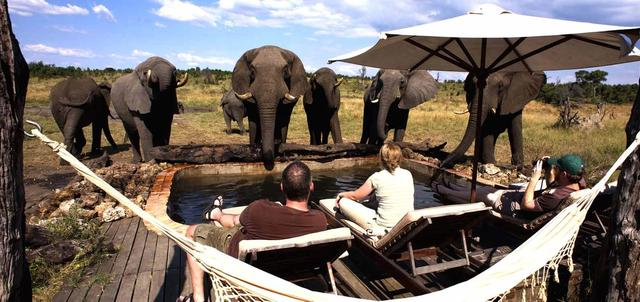 Wildlife Wonders of Zimbabwe