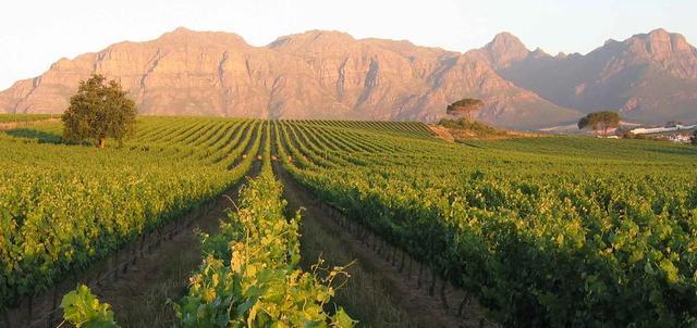 Cape Winelands Meander