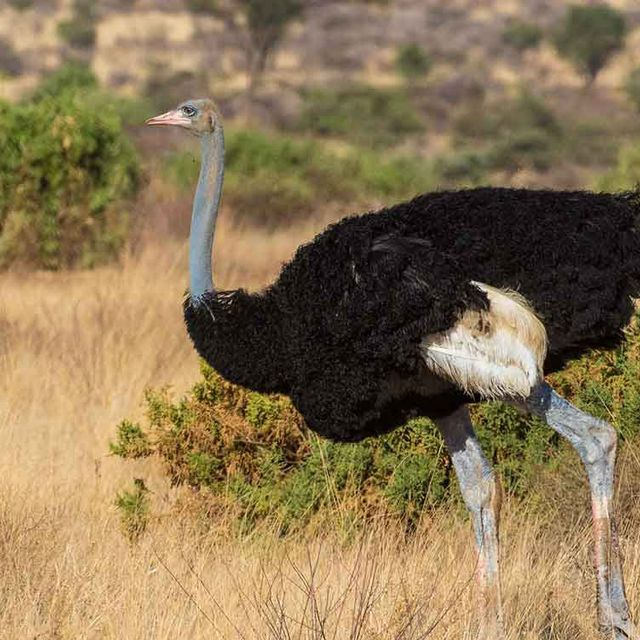 Kenya Shoestring Safari
