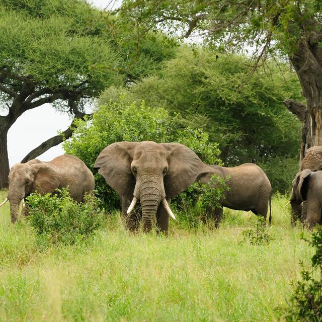 Chitengo Safari Camp