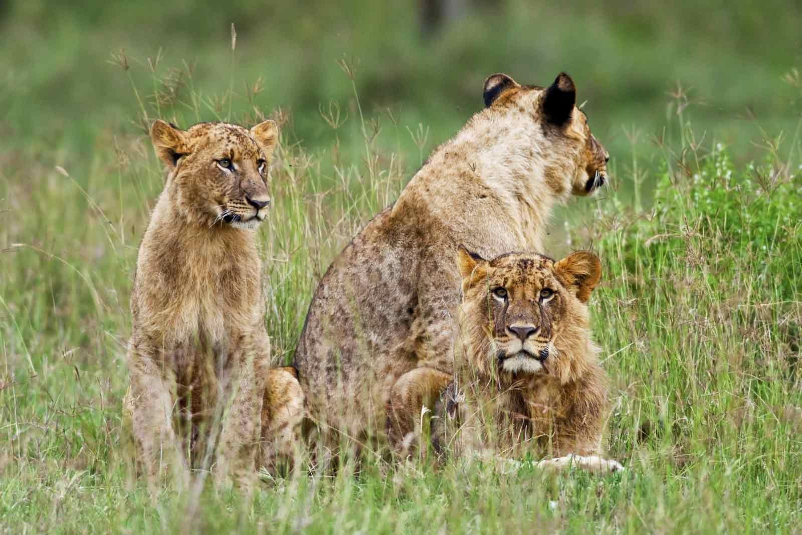 Plan Your Safari