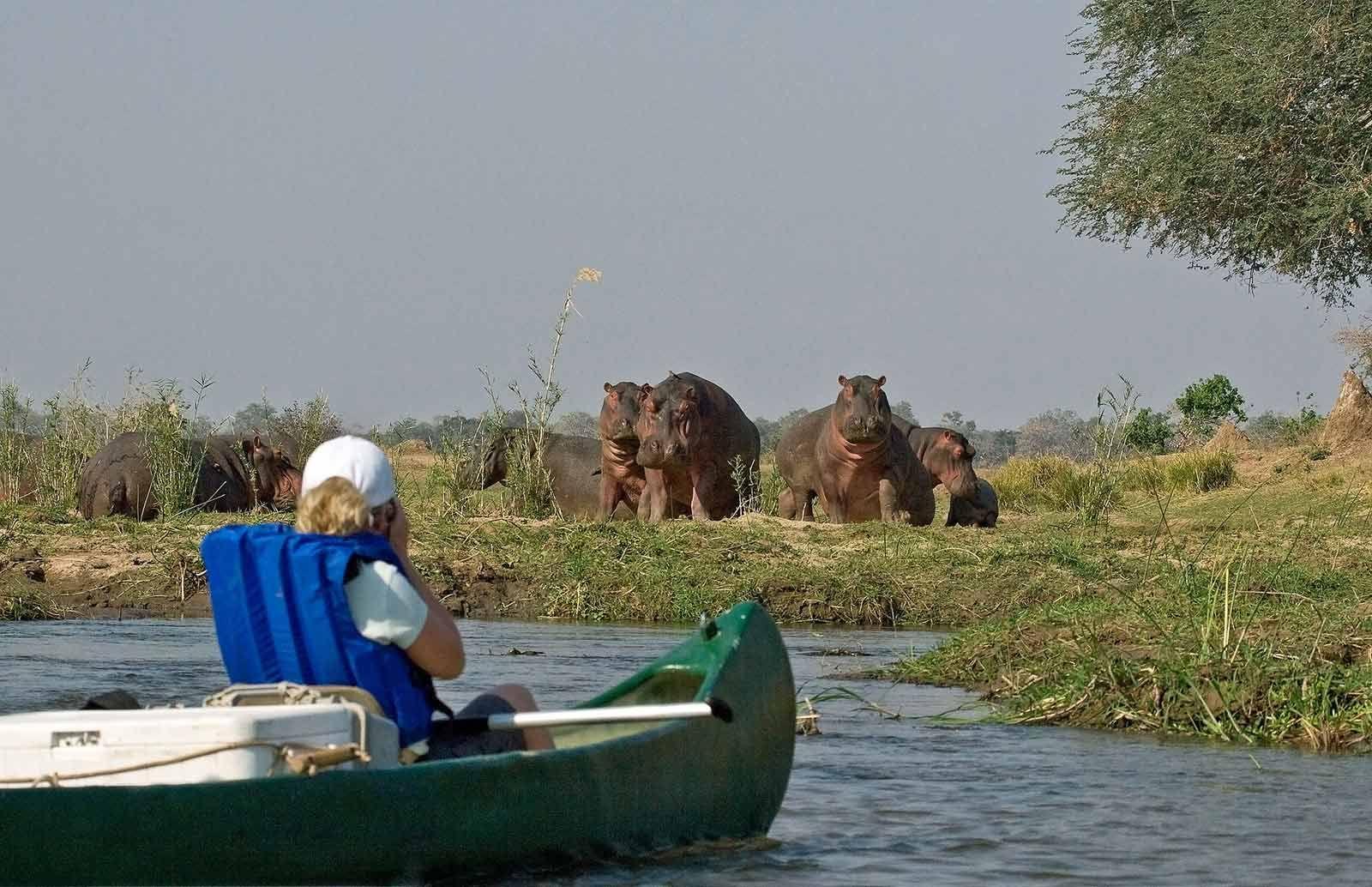 Zambezi Canoeing Safaris