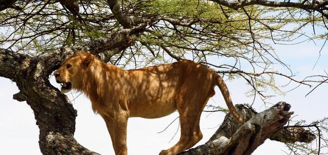 Mbugani Serengeti